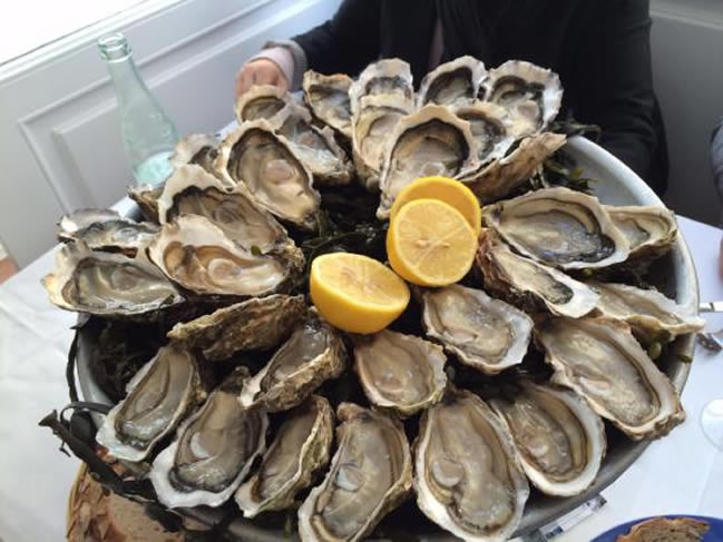 Le Clare oysters tours